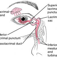 Syringing the Lacrimal Drainage System